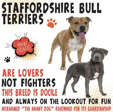 Staffordshire Bull Terriers Metal Wall Sign